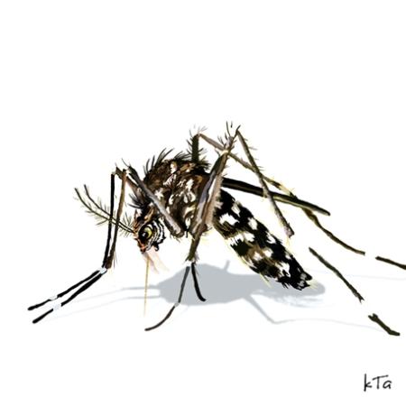 mosquito-tigre.jpg
