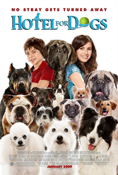 hotelfordogs-a